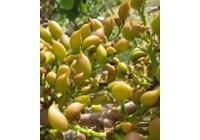 Aegina pistachios